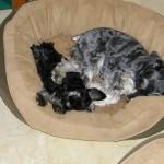 Maxie & Mollie